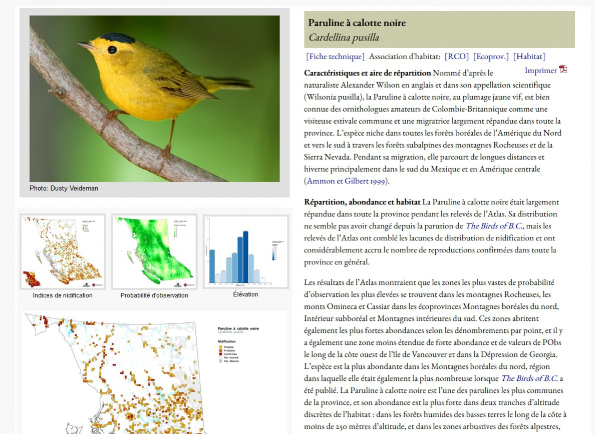 Wilson's Warbler Species Account
